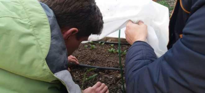 Кальций для винограда – хелатные комплексы АгроБор и Брексил Ca