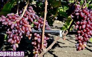 Виноград Карнавал (Павловский Е.Г.) – описание и фото сорта