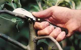 Прививочные ножи для винограда. Заточка в домашних условиях