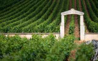 Бур и Блай: описание и особенности вин