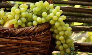 Длительное хранение винограда в домашних условиях