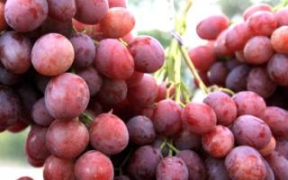 Виноград Ани – описание и фото сорта