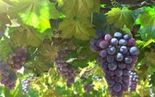 Стимуляторы (регуляторы) роста растений. Применение на винограде