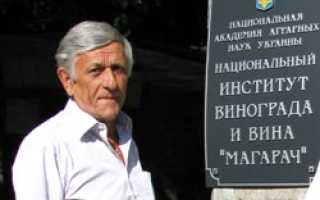 Виноград Дюжина (Китайченко А.И.) – описание и фото сорта