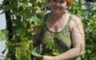 Виноград Антошка (9-7-1) – описание и фото сорта