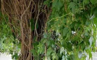 Шпалеры, формировки и обрезка винограда