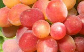Виноград Самородок – описание и фото сорта