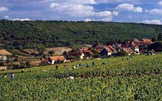 Кот-де-Бон (Мерсо): описание и особенности вин