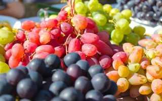 Виноград Озон (Павловского Е.Г.) – фото, видео и описание сорта