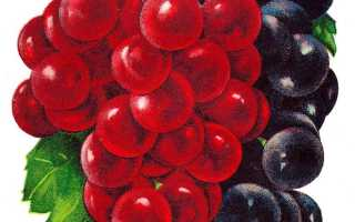 Календарь виноградаря 2020г. Весна