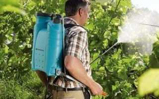 Устойчивость винограда и методы его защиты