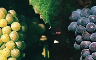Кот-де-Бон (Сантенэ): описание и особенности вин