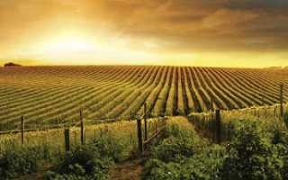 Шампань: описание и особенности вин
