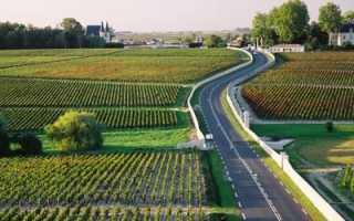 Северный медок: описание и особенности вин