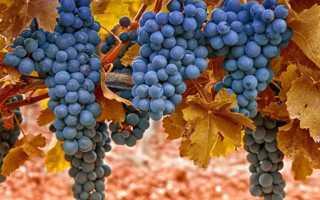Морозостойкость винограда. Изменения в течение зимовки