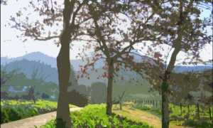 Вувре и Мондлуи: описание и особенности вин