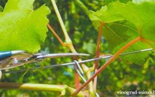 Зеленые операции на винограде
