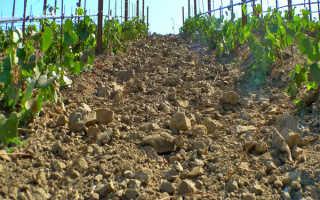 Питание винограда и содержание почвы виноградника