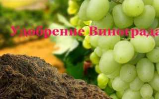 Навоз и перегной для удобрения и подкормок винограда