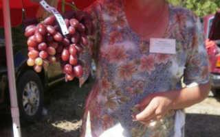 Виноград кишмиш Русалка – описание и фото сорта