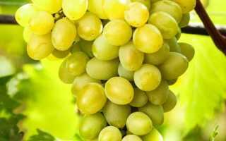 Виноград Августин – описание и фото сорта