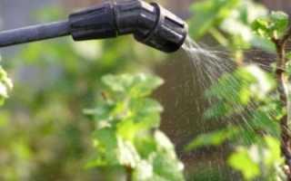 Квадрис – применение на винограде (милдью, оидиум)