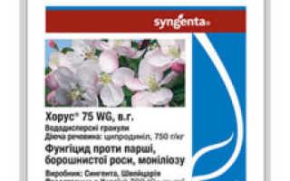 Фунгицид Хорус – рекомендации по применению на винограде