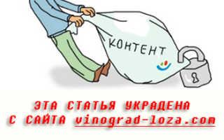 Виноград Урум селекции Балабанова А.Ф. – описание и фото сорта