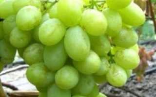 Виноград Валек (Вишневецкого Н.П.) – описание и фото сорта