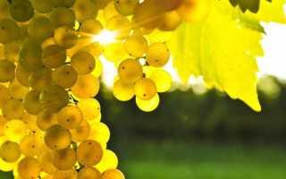 Бургундия: описание и особенности вин