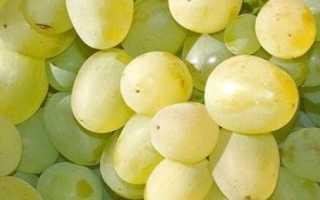 Виноград 887-супер (Загорулько В.В.) – описание и фото сорта