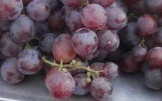 Виноград Низина (Крайнова В.Н.) – описание, фото и видео сорта