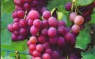 Виноград Регал сидлис (Regal seedless) – описание и фото сорта