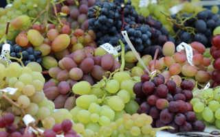 Виноград Лиепаяс Дзинтарс – фото, видео, описание сорта